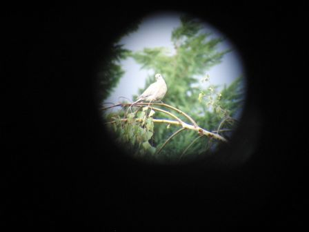 longue vue ornithologie