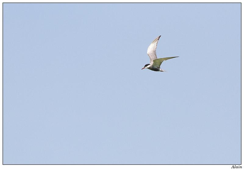 lunette observation oiseaux