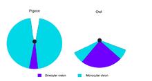 monoculaire vision nocturne